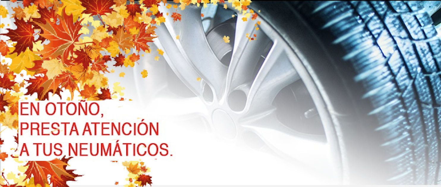Garantía Pirelli Tyre Life